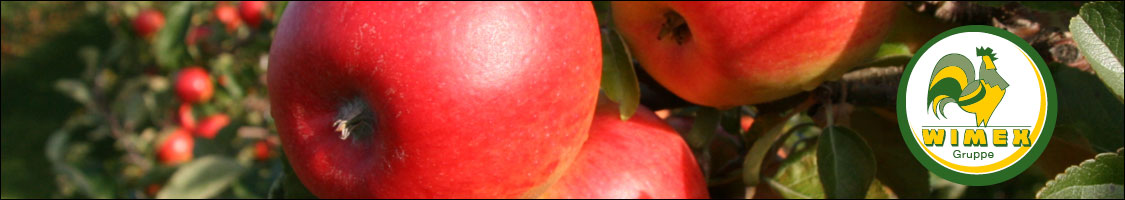 Banner apples on a tree