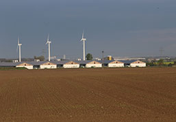 Picture quicken house with wind mills
