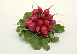 Picture bunch of red radish